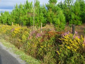 chemin verdoyant