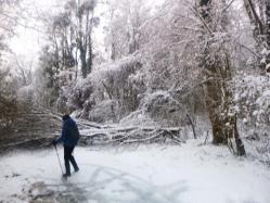 Beaucoup de branches tombées